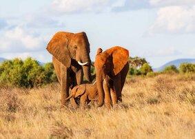 rsz_elephants-in-kenya-shutterstock_209086093-2_3198ab1220