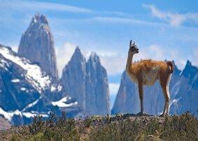rsz_guanaco-lama-andes-torres-del-paine-patagonia-chile-shutterstock_14121091_c959d664ec